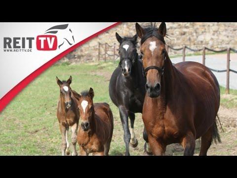 Trakehner – die edlen Pferde im Rasseportrait