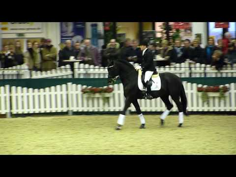 Hibiskus Trakehner stallion born '00