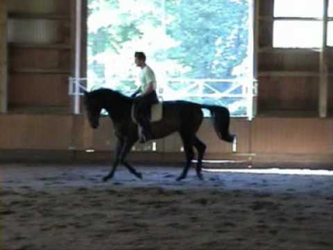Trakehner v. Hofrat geb. 2007 Verkaufspferd Juni 2010 eine Woche unter dem Sattel