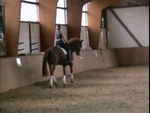 For Sale – Verkaufspferd – Pr.St. Polarsonne – Trakehner Stute