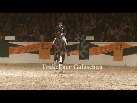 Trakehner Galaschau – 50. Trakehner Hengstmarkt