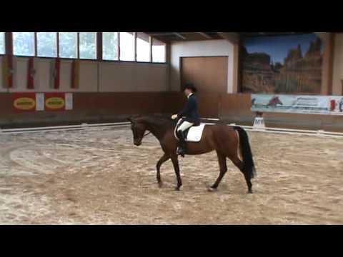 Donnerfee excelsior CDN-A Weikersdorf Dressurpferdepr. 4 jährige Pferde