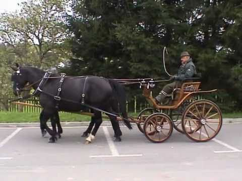 Verkaufspferde Gespann Schweres Warmblut Traditionsfahren Lossburg 2010