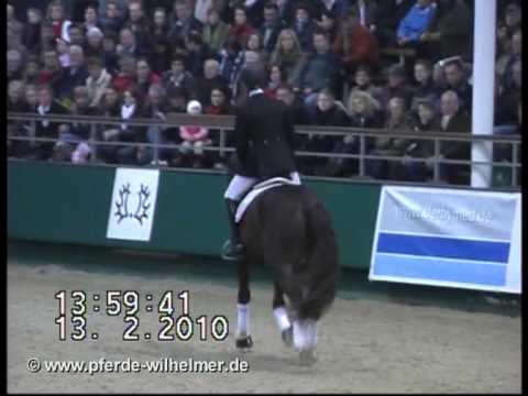 All Inclusive Trakehner Hengstschau Münster-Handorf 13.02.2010