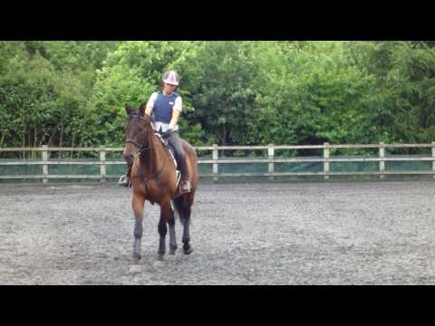 Keatinge Trakehner – Singing Illario. Horse riding dressage video
