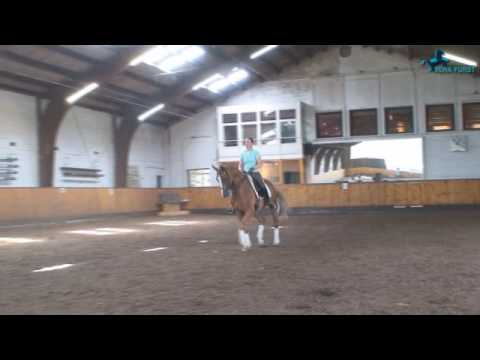 Trakehner Dressage by Stallion Buddenbrock