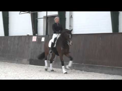 German Grand Prix Dressage Horse by Stallion De Niro