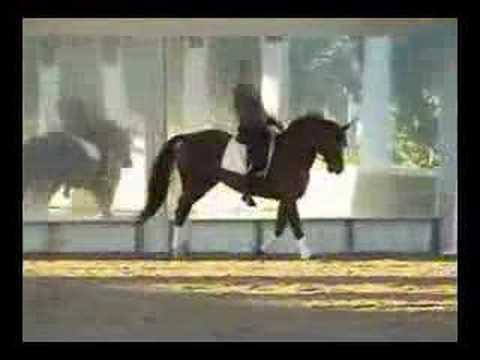 ES Bonheur – 1993 Hanoverian Stallion