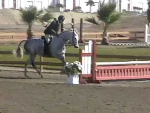 La Boheme – Fancy Hunter For Sale