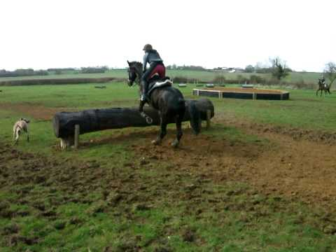 4 yrs 16.1 hh Black Trakehner – Oxfordshire