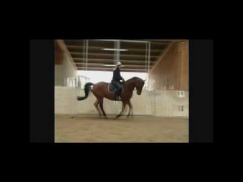 Trakehner Stute Mituva, Verkaufspferd