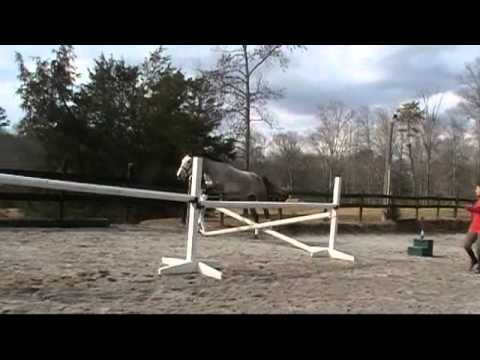 Vigilance Trakehner Mare Free Jumping For Sale