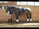 Free lunging '05 gelding by Rubino Bellissimo