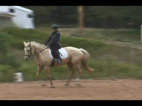 Field Mouse, American Warmblood Event Mare