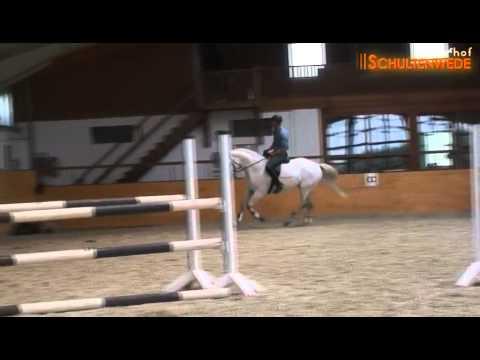 S* – Springpferd von Landor S – Pferdeverkauf