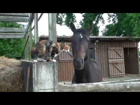 Cat plays with Horse (Katze Jenny spielt mit Pferd). Very Cute!