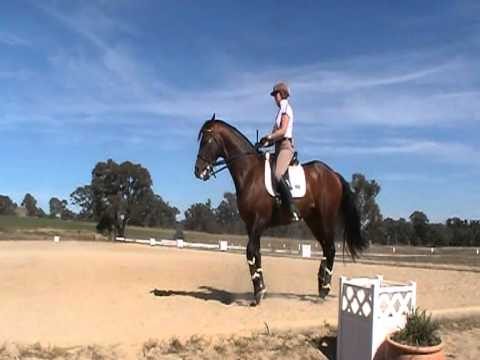 Noble Monarch Trahehner Stallion at Ilse Schwarz Dressage ClinicApr11 016.MOD