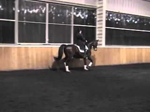 Emeer – Trakehner Stallion