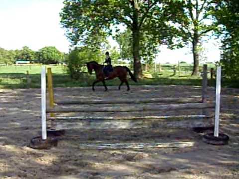 Bardot – ehrlicher Wallach für ambitionierten Reiter –