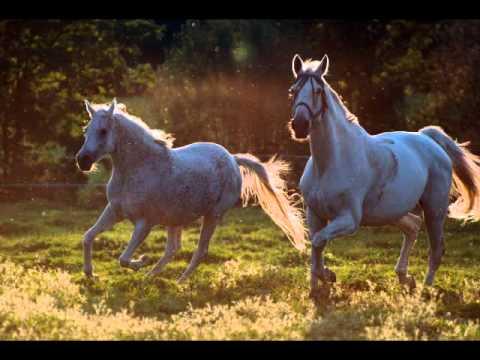 pferde schleindlgut teil 1 von bettina niedermayr.wmv