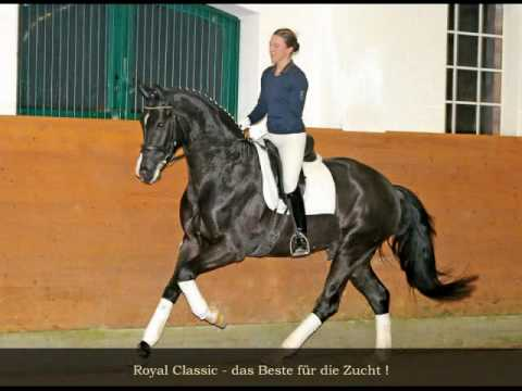 www.axel-windeler-pferdezucht.de Royal Classic by Royal Highness Hanoverian Licensed Stallion