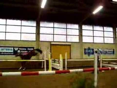 Das Pferdekauf-Online Video – www.pferdekauf-online.de
