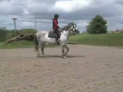 Trakehner mare for sale