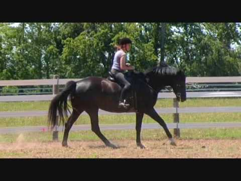 21.for sale dressage performance sporthorses-mostly video