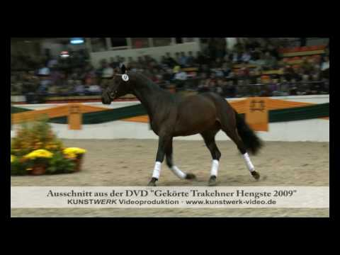 Kentucky – Trakehner Hengstmarkt 2009