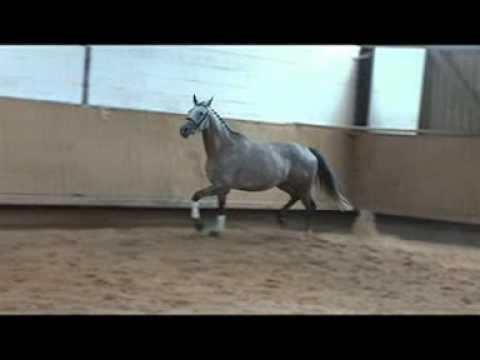 Rega Verkaufspferd von Handryk x Mahagoni