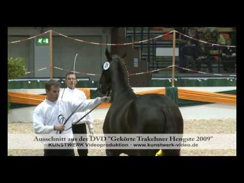 All Inclusive – Trakehner Hengstmarkt 2009