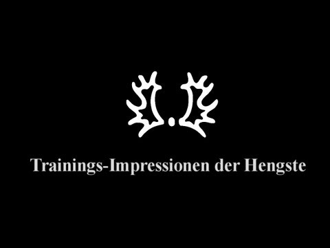 Trakehner Hengstmarkt 2012 – Trainings-Impressionen der Hengste