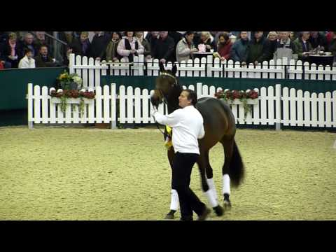 Kentucky trakehner hengstschau Münster – Handorf 2010