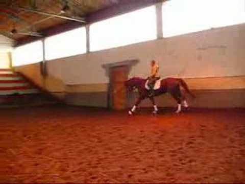 DRESSAGE TRAKEHNER MARE FOR SALE