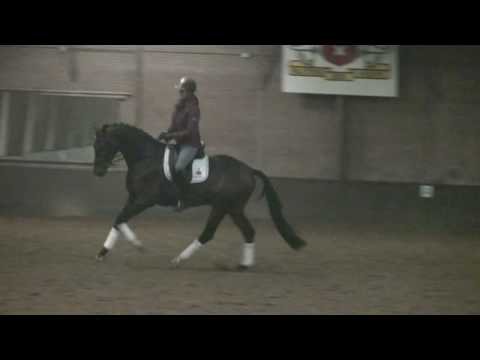 Sporthorse / Dressage horse for sale: Barack Obama