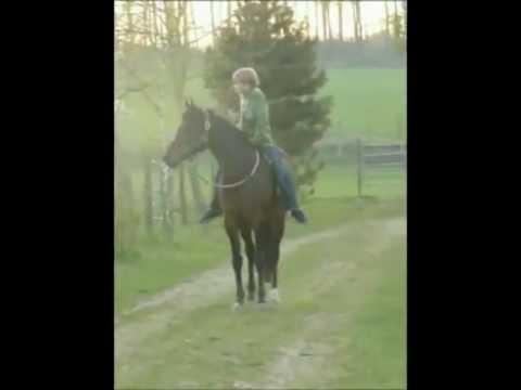 Ein Junge und ein Pferd in einer wundervollen Verbindung – Mit Pferden sein