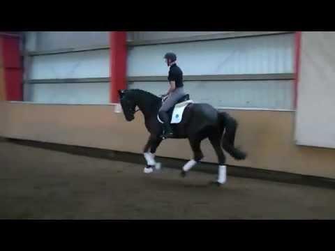 3j. Trakehner Wallach – Verkaufspferd, for sale
