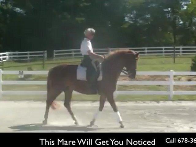 Dressage Horses For Sale