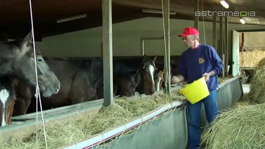Fohlenweid Bremgarten, Bremgarten, Pferde, Fohlen