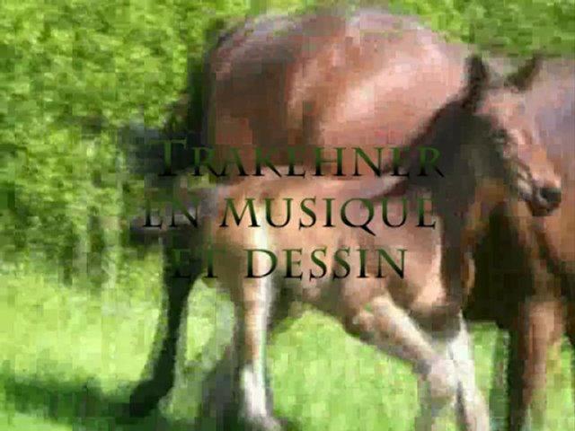 trakehner en musique et dessin par equi jane peinture