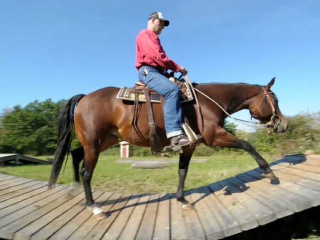 Kletterspaß für Pferde