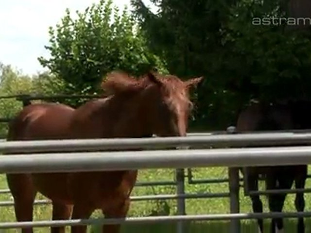 LT Farm Performance Horses, Müllheim, Pferdepension, Reithalle und Reitunterricht