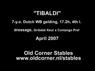 Tibaldi Gribaldi gelding dressage