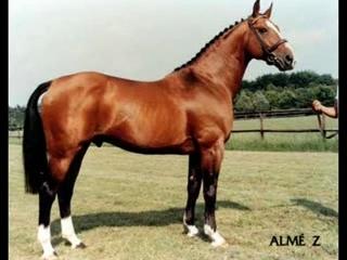 races de chevaux