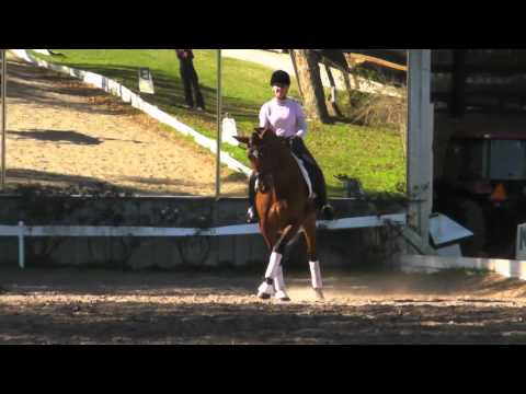 Talented Dressage Mare SOLD