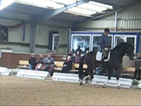 Trakehner vom Stall Krotenbach – Latin King – Winterforum 2009