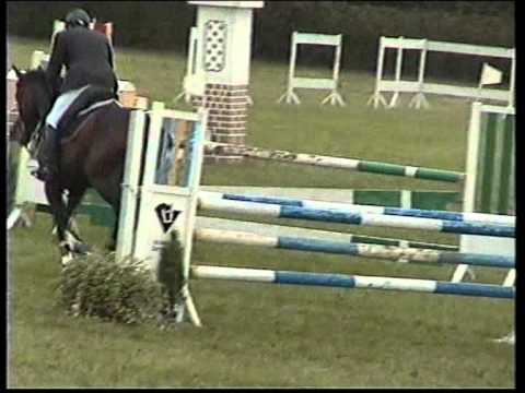 Horse for sale trakehner gelding VOLFAS by GLUOSNIS (LITHUANIA)