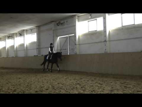 Trakehner Stute Träumchen, Verkaufspferd