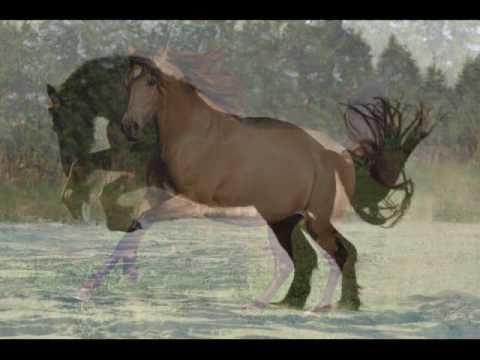 pferde schleindlgut teil 3 von bettina niedermayr