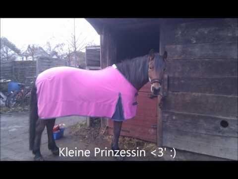 Kimberly, mein Pferd
